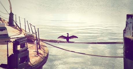 Gaviota entre barcos